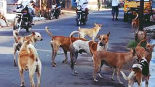 Problem of stray dogs